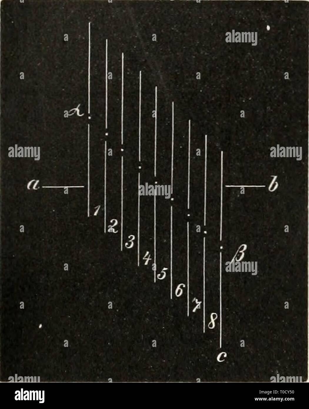 """Elektrophysiologie (1895) Elektrophysiologie elektrophysiolog00bied Year: 1895  Die elektromotorischen Wirkunofen der Muskeln. 329 durch die von den Nerveneintrittsstellen (a — ß) ausgehenden Er- regungswellen früher und stärker beeinflusst werden müssen, als die unteren, der Achillessehne entsprechenden Faserenden. Es wird also zunächst ein absteigender, dann aber ein schwächerer aufsteigender Actionsstrom resultiren. """"Die obere Muskelhälfte müsste gerade um- gekehrt zuerst aufsteigend, dann absteigend wirken; jedoch ist der Bau des Muskels hier wesentlich anders; der grösste Theil des oberen Stock Photo"""