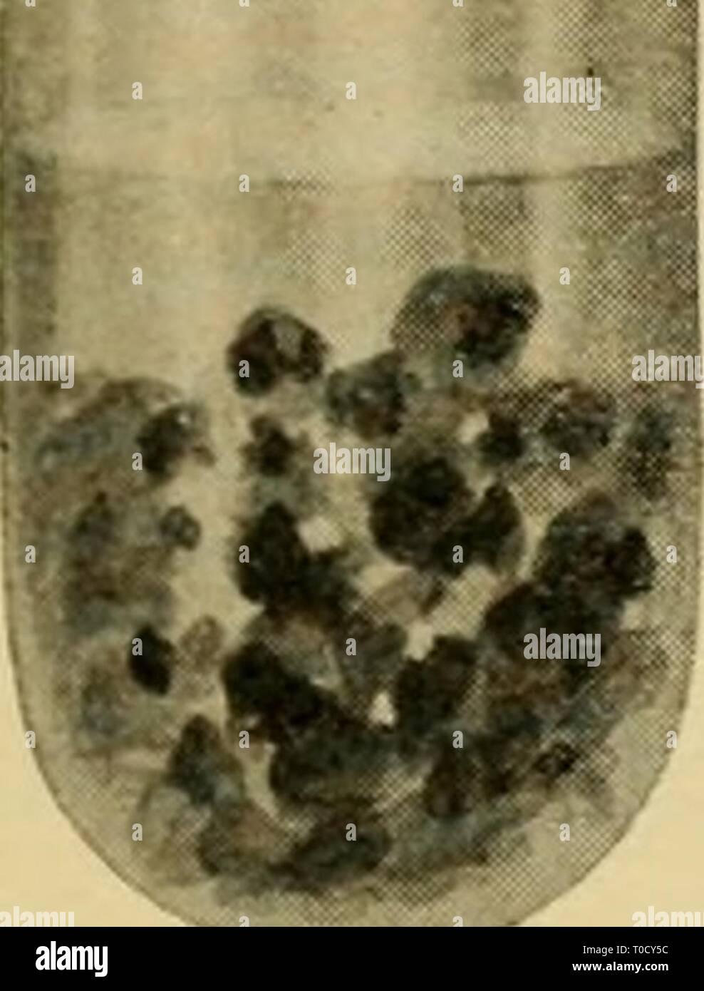 Elementary entomology (1912) - Stock Image