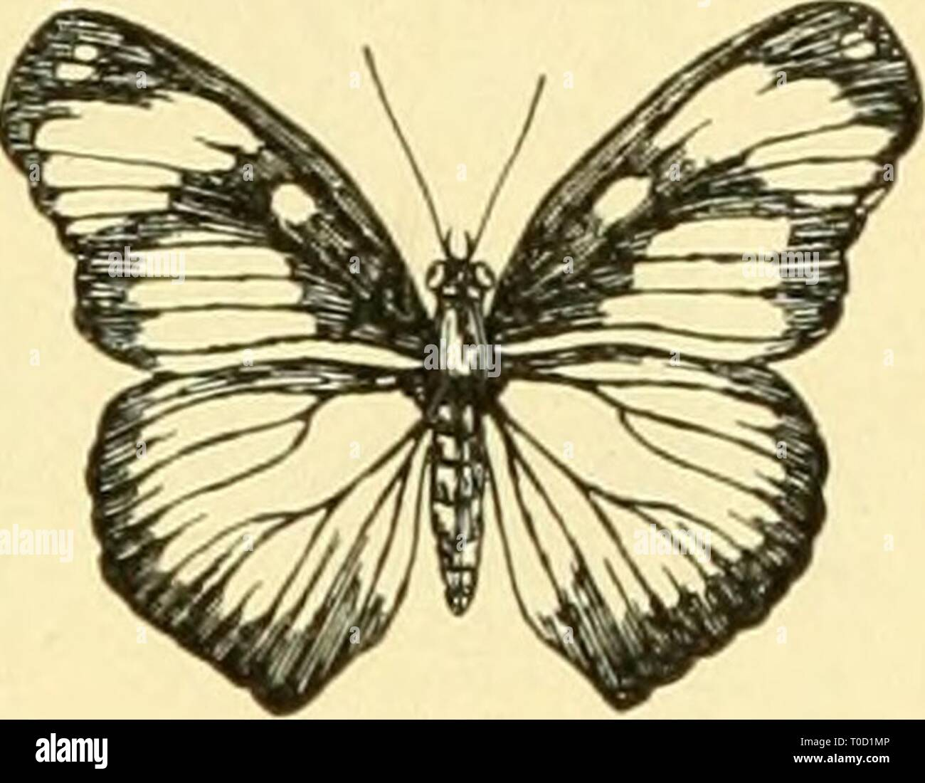 Elementary biology; an introduction to Elementary biology; an introduction to the science of life elementarybiolog00grue Year: 1924 Stock Photo