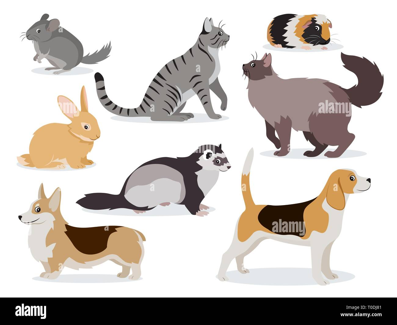 Pets icon set, cute gray chinchilla, fluffy ferret, smooth coated and domestic long-haired cats, corgi, beagle, dogs, rabbit, guinea pig isolated - Stock Vector