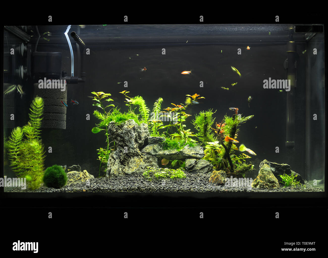 Aquascape High Resolution Stock Photography And Images Alamy