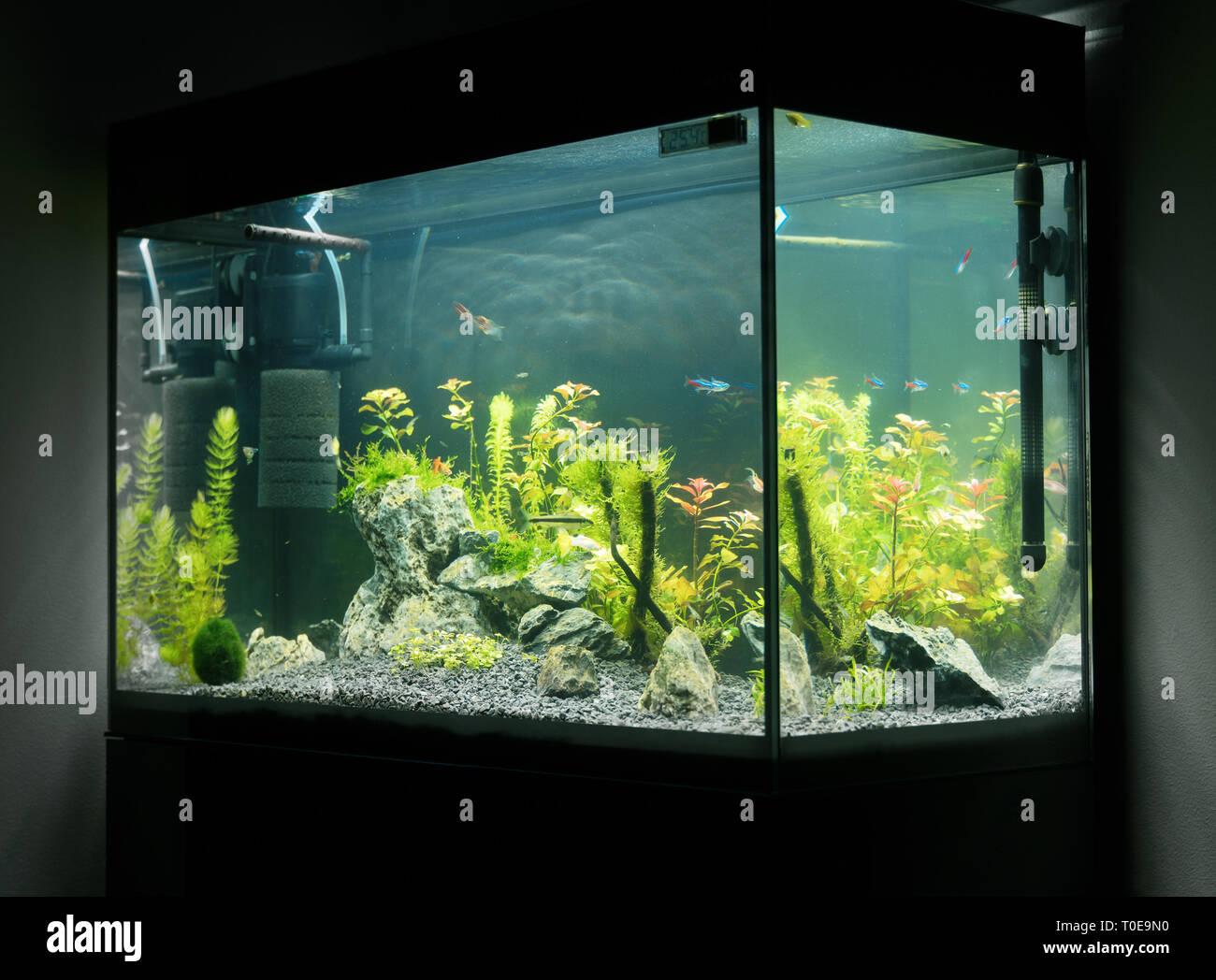 Beautiful Planted Tropical Freshwater Aquarium With Fishes Aquascape Stock Photo Alamy
