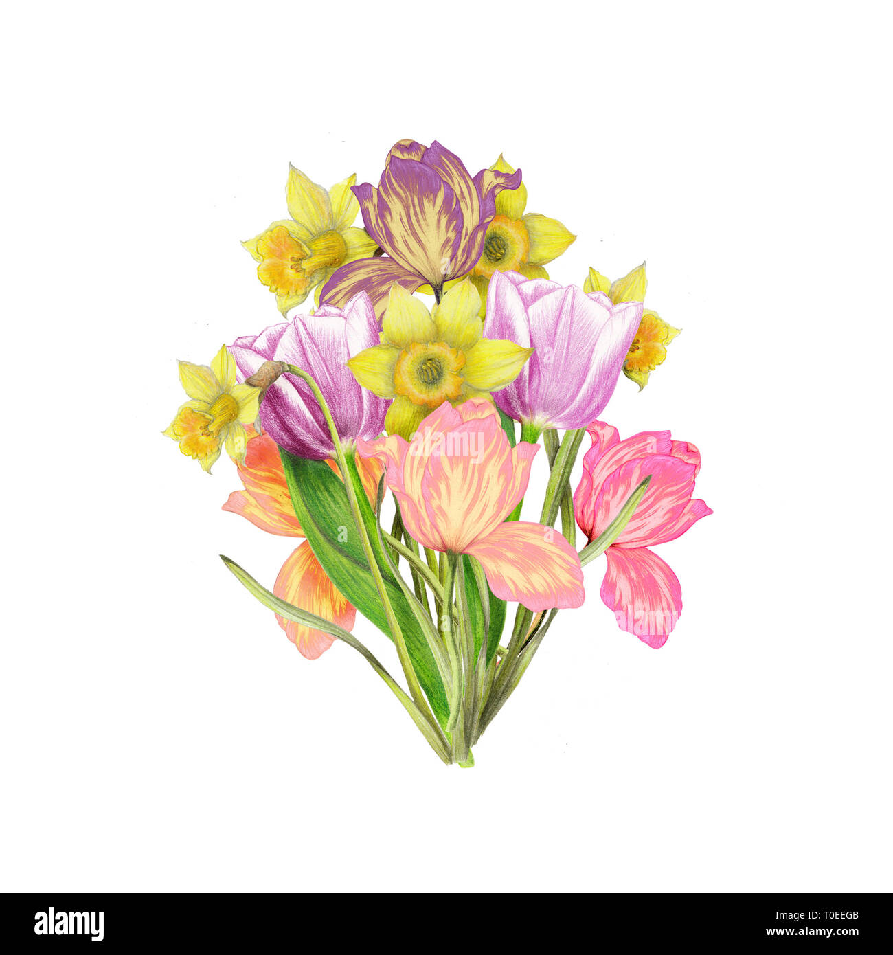 Hand drawn bouquet of narcissus,tulips Stock Photo