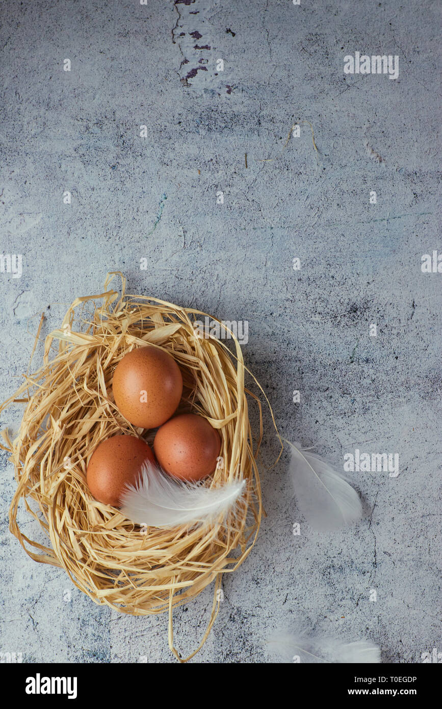 Top view of three brown chicken eggs in a nest of straw on gray concrete. Plenty of room for text. Copy space - Stock Image