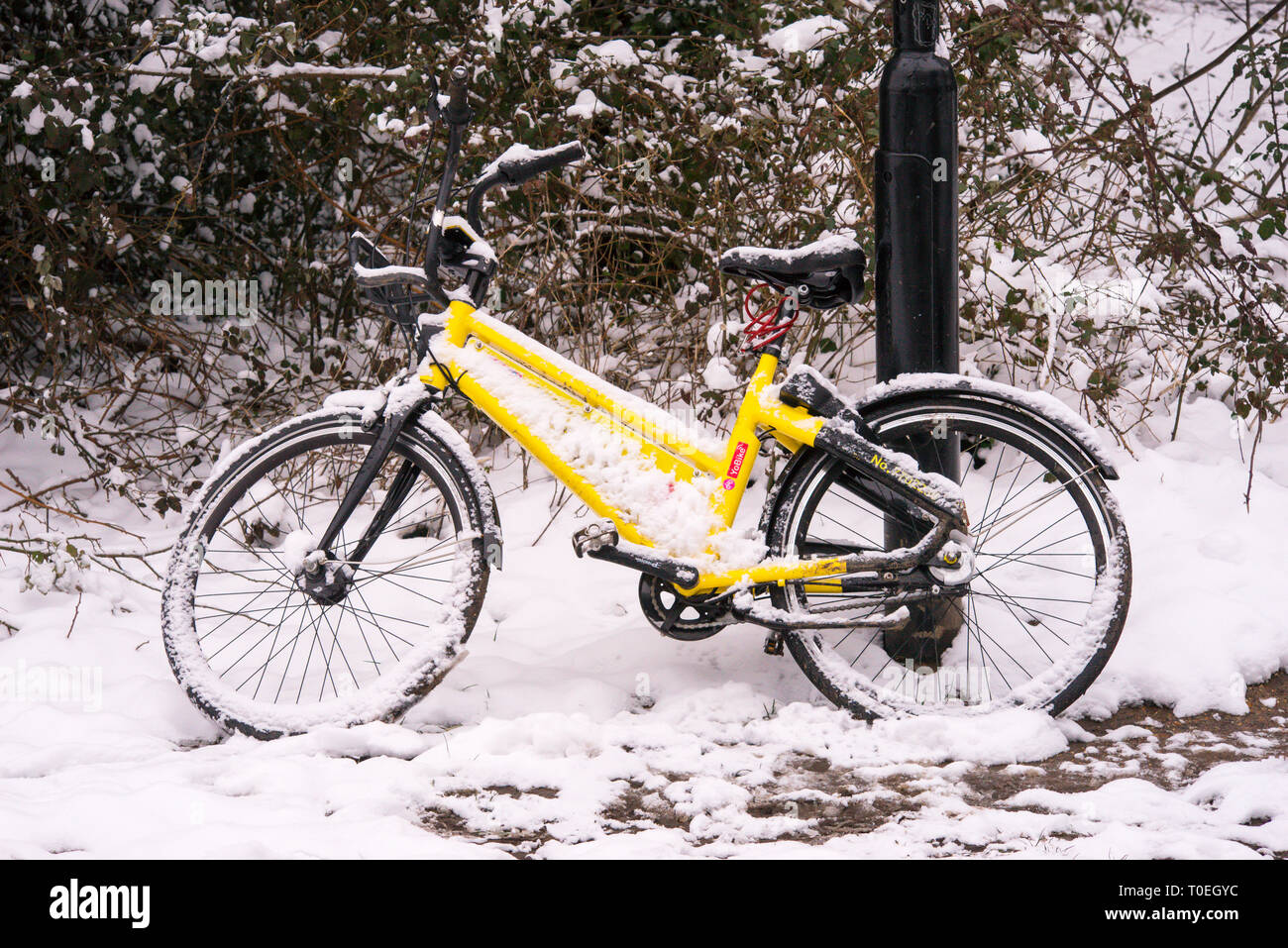 A bicycle belonging to the YoBike dockless bike sharing scheme abandoned in snow on Southampton Common. - Stock Image