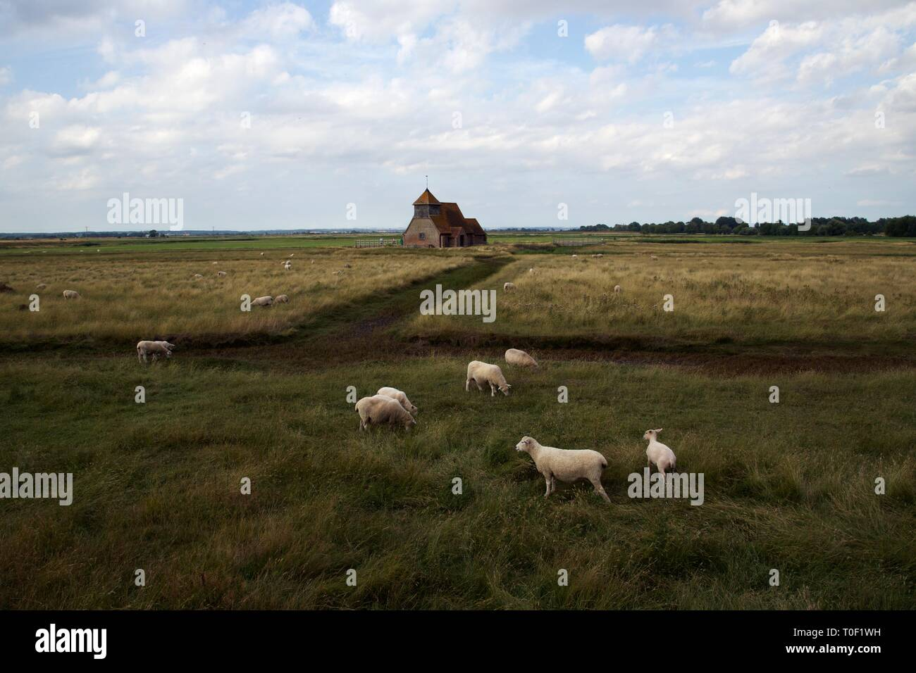 Panoramic view of the iconic St Thomas à Beckett Church, Fairfield, Romney Marsh, Kent with sheep in foreground - Stock Image