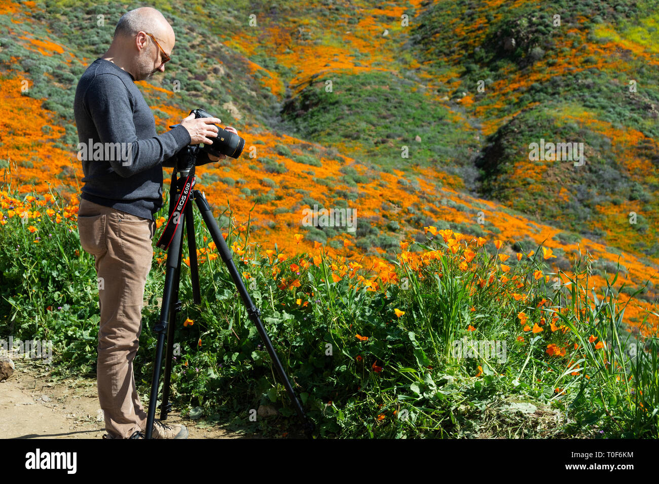 Super Bloom 2019. Prior to its closure, photographers, such as this man, were out in droves to capture photos of the poppies at Walker Canyon. - Stock Image