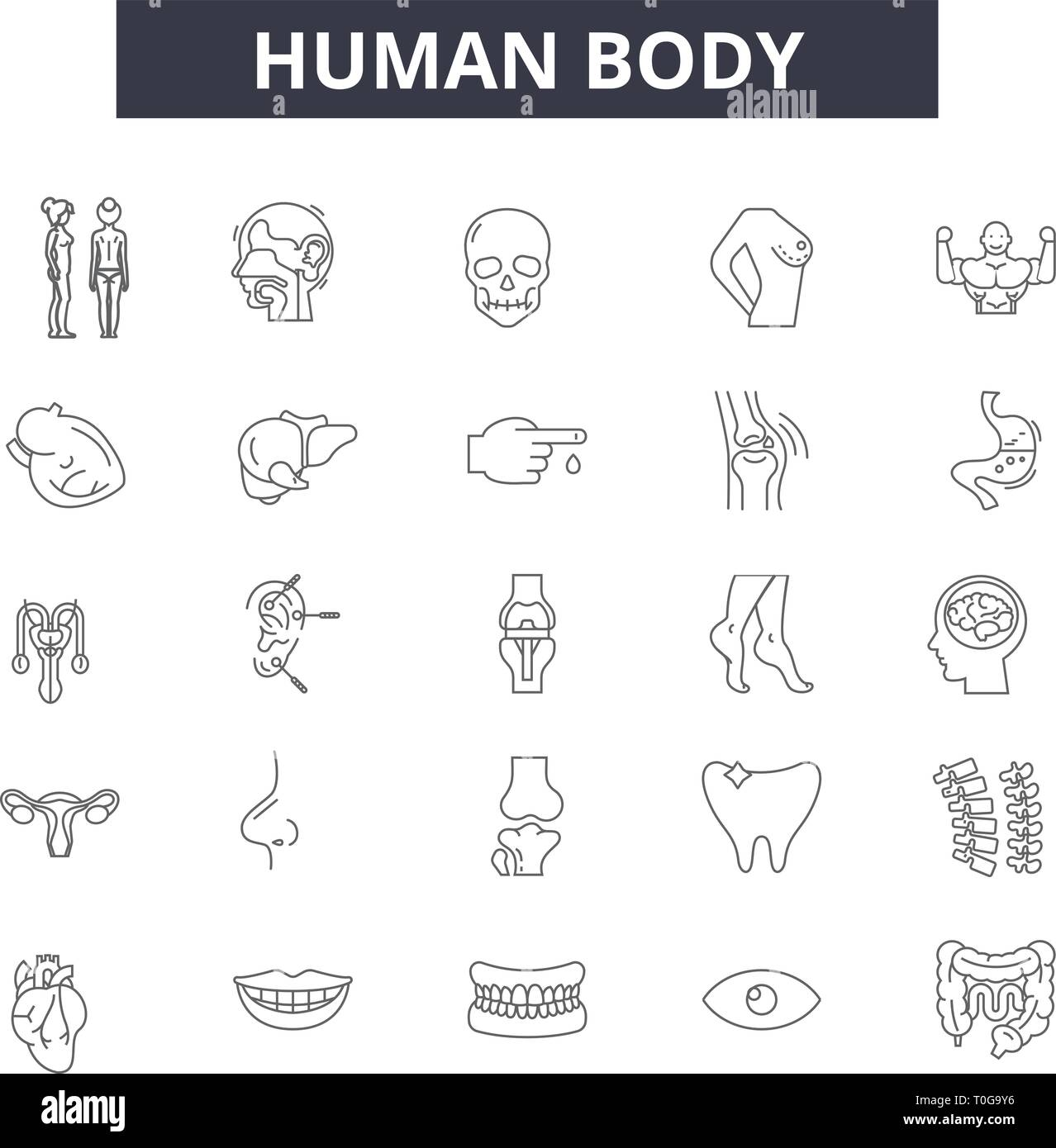 Human body line icons for web and mobile. Editable stroke signs. Human body outline concept illustrations - Stock Image