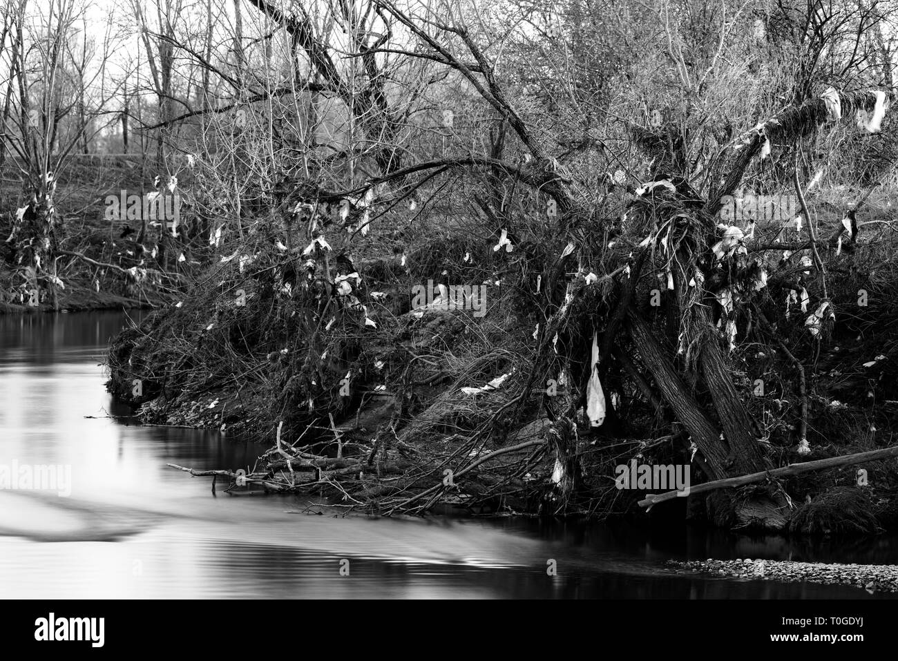 Plastic waste pollution on river bank trees - Stock Image