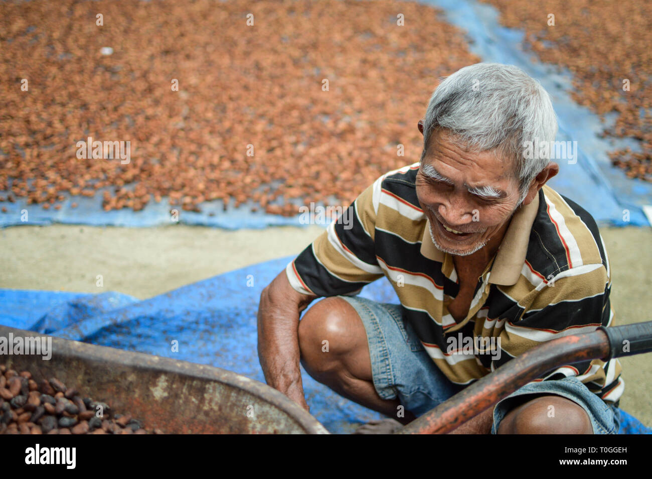 Sumatra, Indonesia – January 14, 2018: Local farmer sundries the harvest of his cocoa beans to prepare them for sale, in Lake Toba, Sumatra, Indonesia Stock Photo