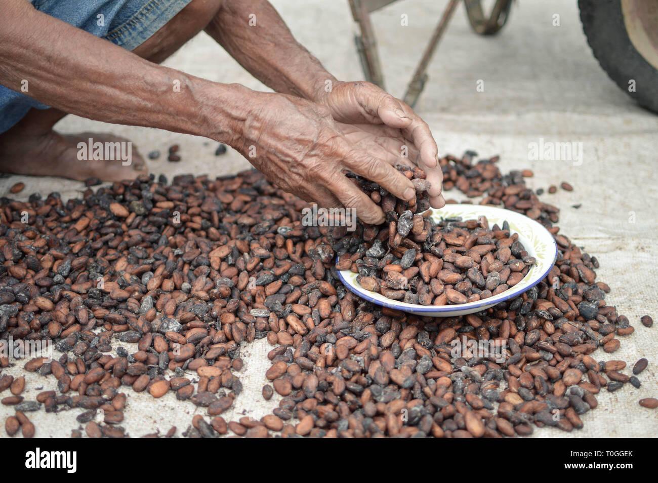 Cocoa seeds being sundried in the sun. Samosir Island in North Sumatra, Indonesia Stock Photo