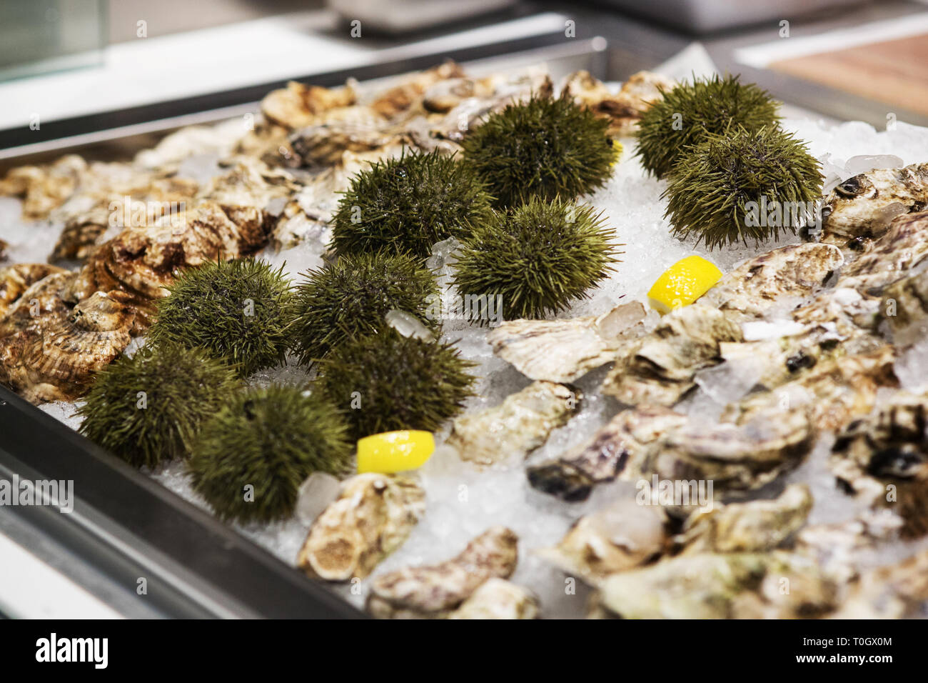 Fresh sea urchin and oysters for sale at a seafood market in Boston, Massachusetts, USA. - Stock Image