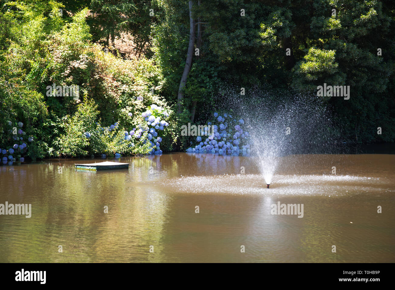 Entspannung am Weiher - Stock Image