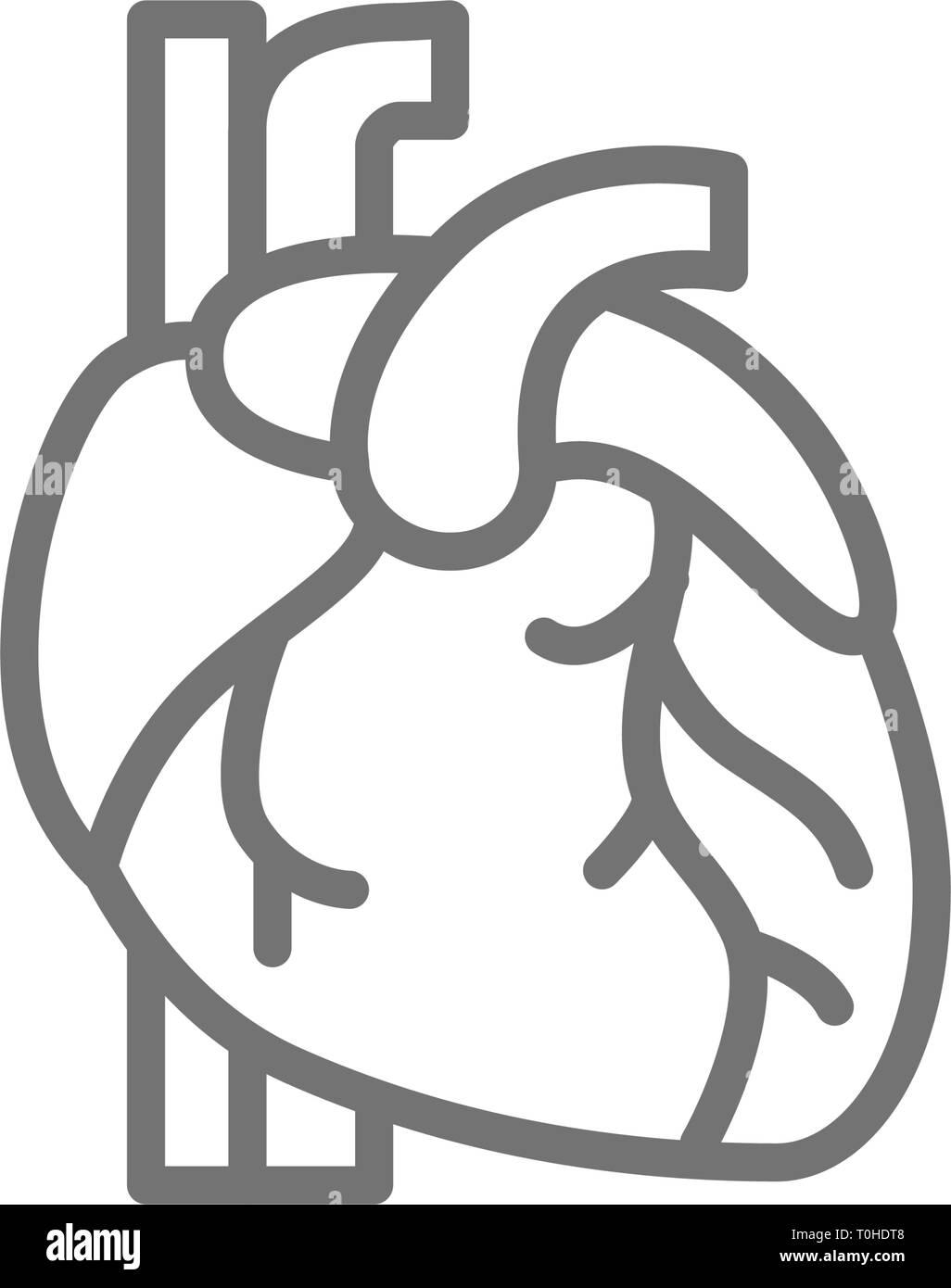 Heart, artery, vein, human organ line icon. - Stock Image