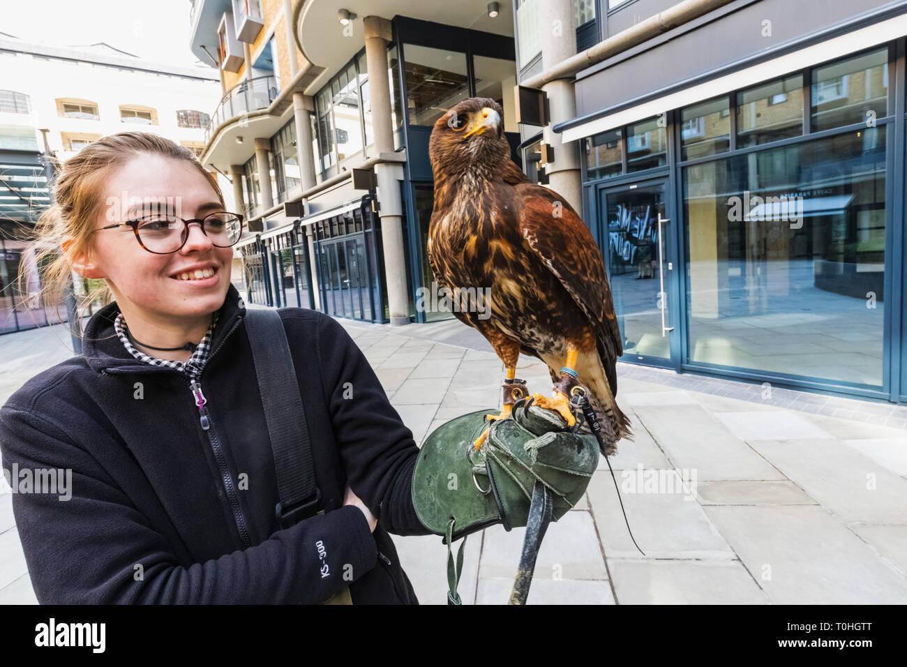 England, London, Southwark, Falconer Using Falcon for Pigeon Control Stock Photo