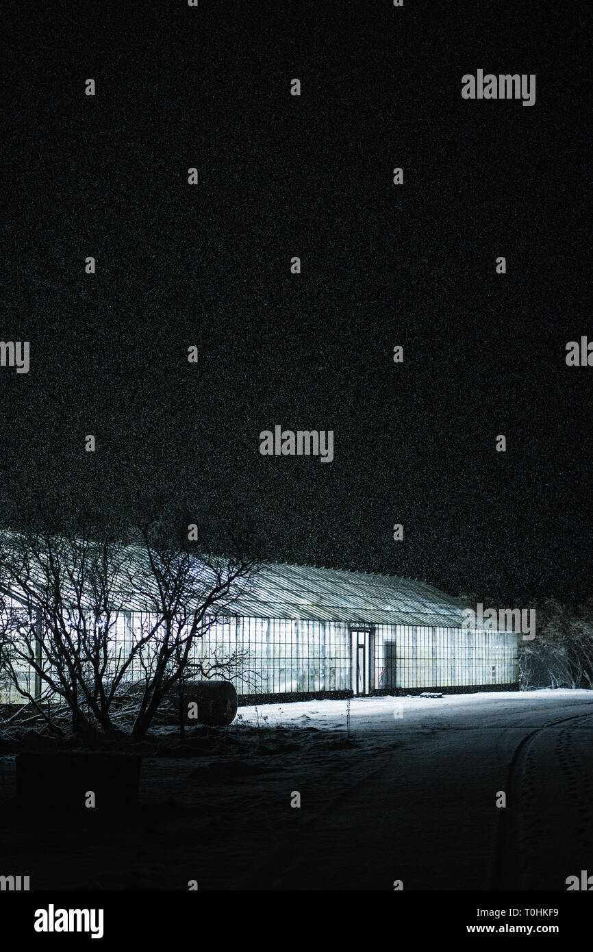 Snowfall at night on a greenhouse in Iceland, with the snow illuminated. The snowfall slowed down due to the heat coming from the greenhouse. - Stock Image