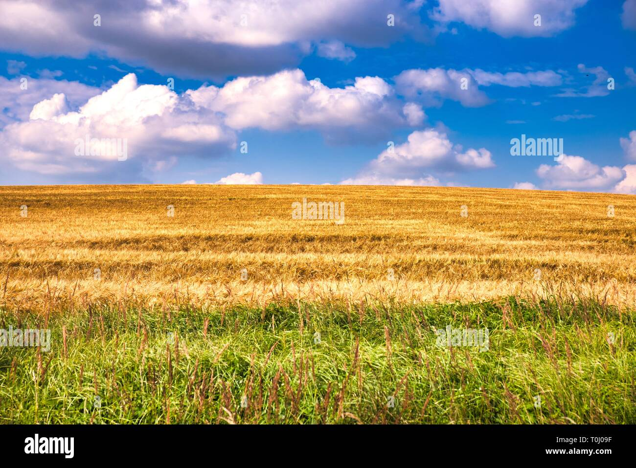 colorful field in the nature - Stock Image