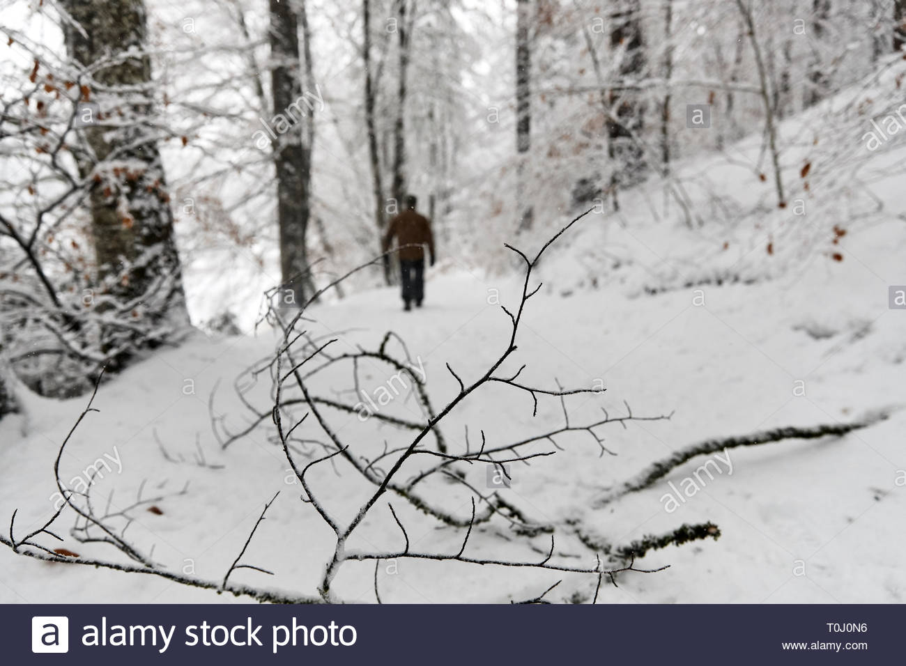 A man in countrysides rural winter snowing scene - Stock Image