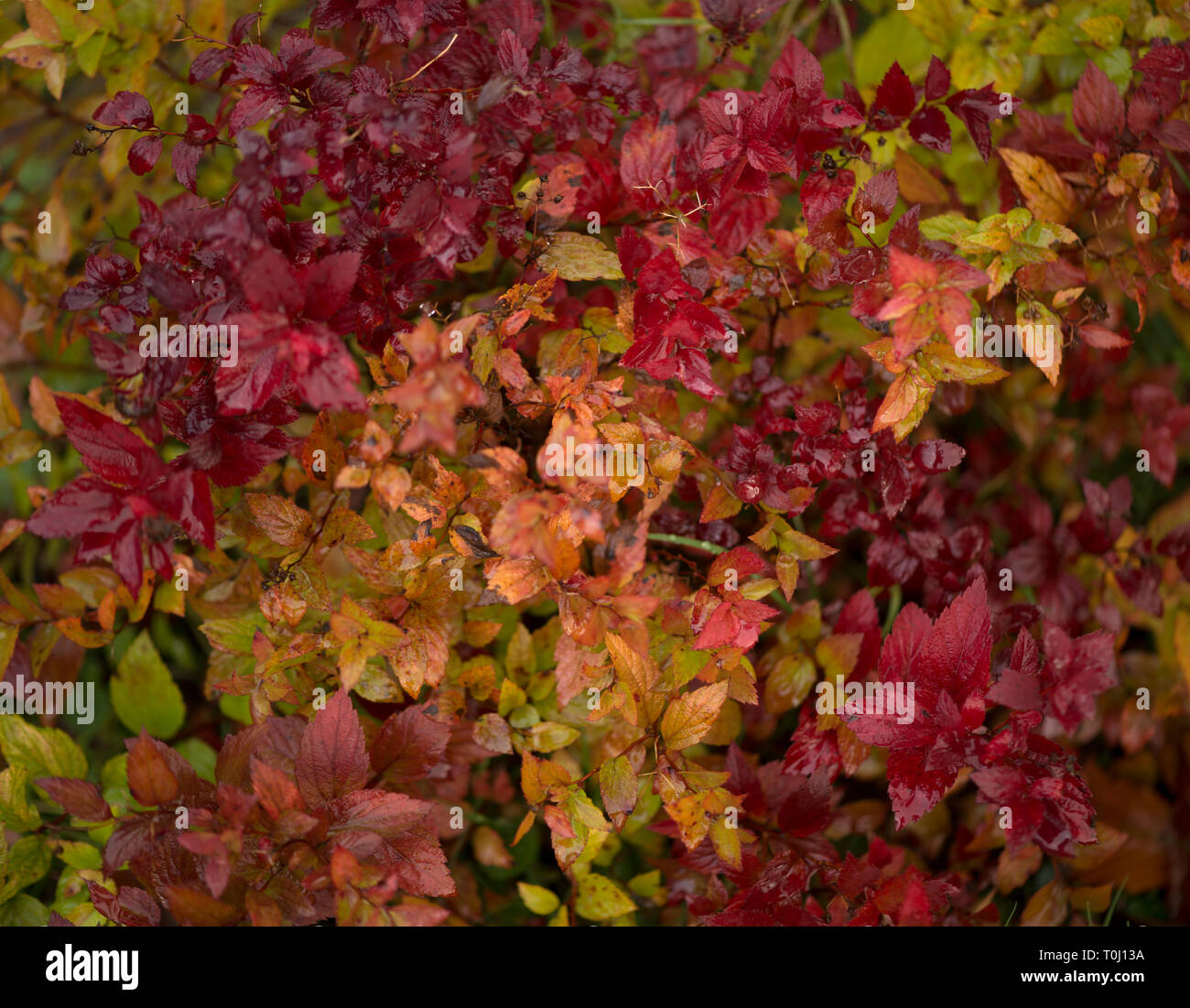 Plants in Sweden - Stock Image