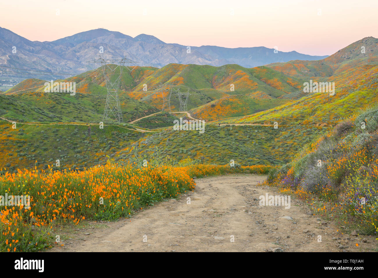 Wildflower superbloom in Walker Canyon in the month of March. View of the Walker Canyon Trail.  Lake Elsinore, California, USA. - Stock Image