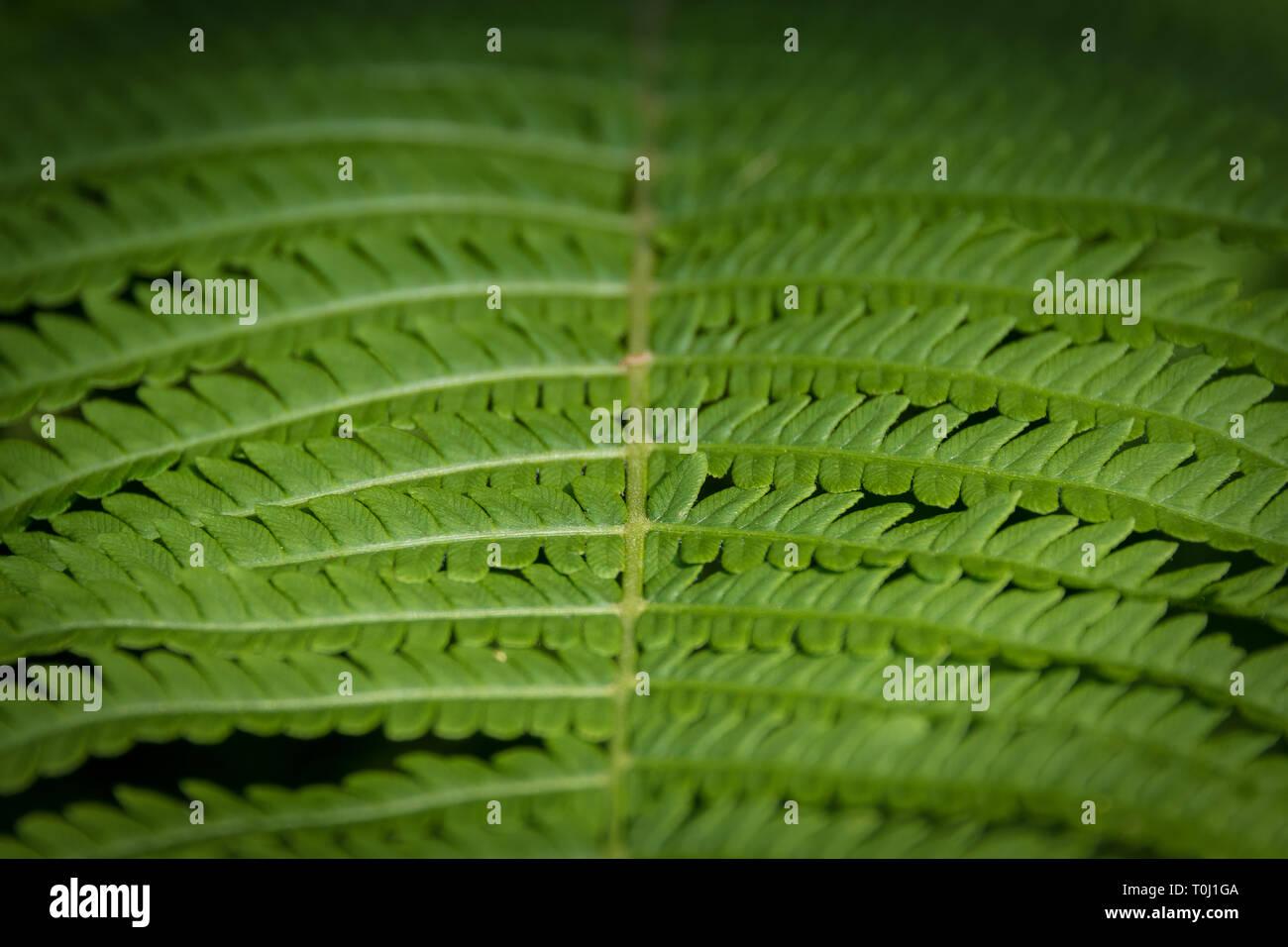 Ferns at Kew Royal Botanic Gardens, London, United Kingdom Stock Photo
