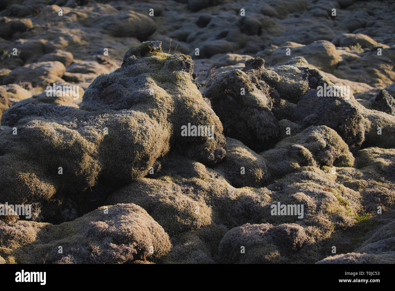 Lava field and lava rocks covered by the moss, panorama - Stock Image
