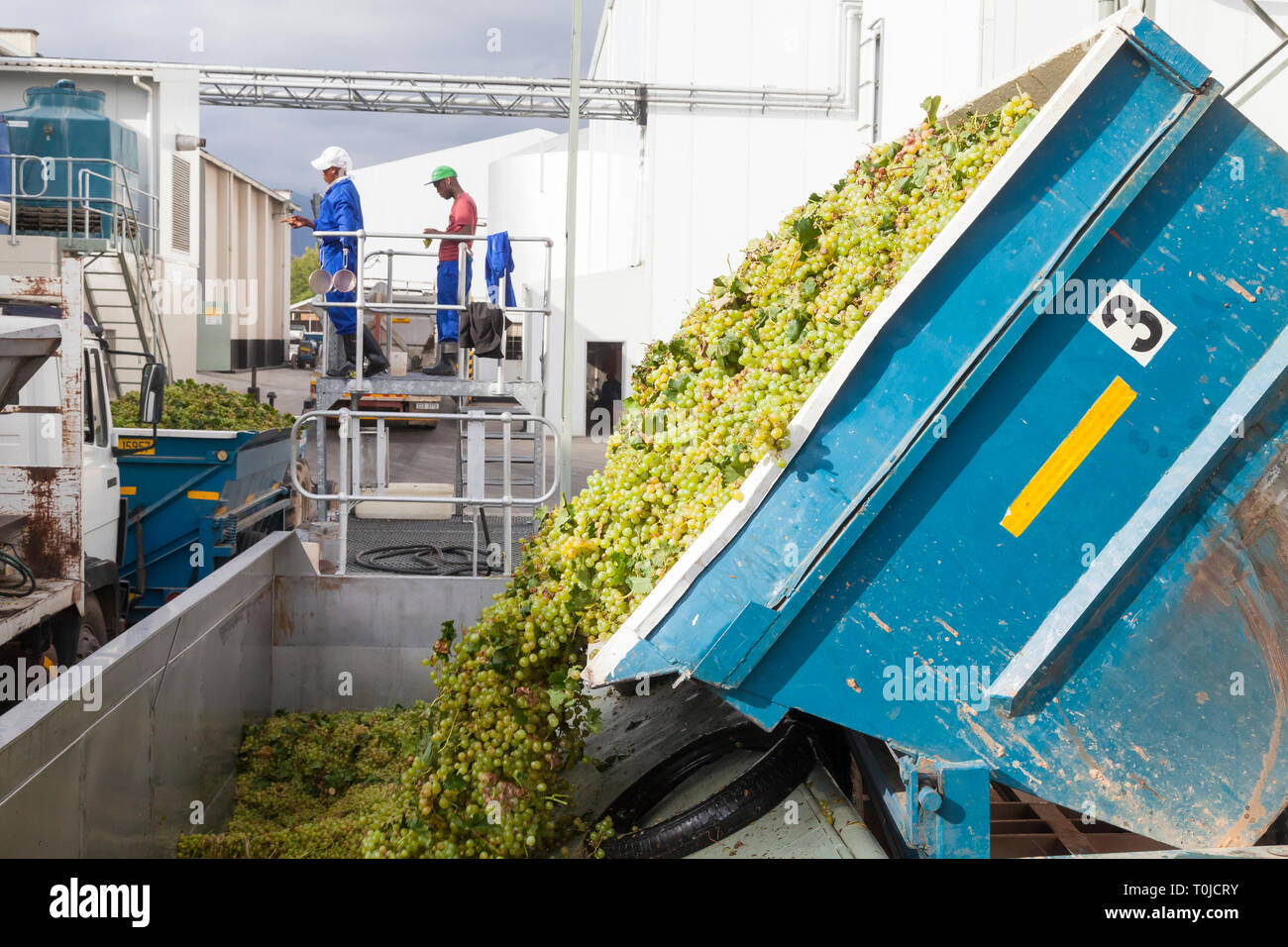 Grape Harvest Robertson, Robertson Wine Valley, Western Cape Winelands, South Africa. Truck delivering hanepoot grapes Roodezandt Cellars - Stock Image