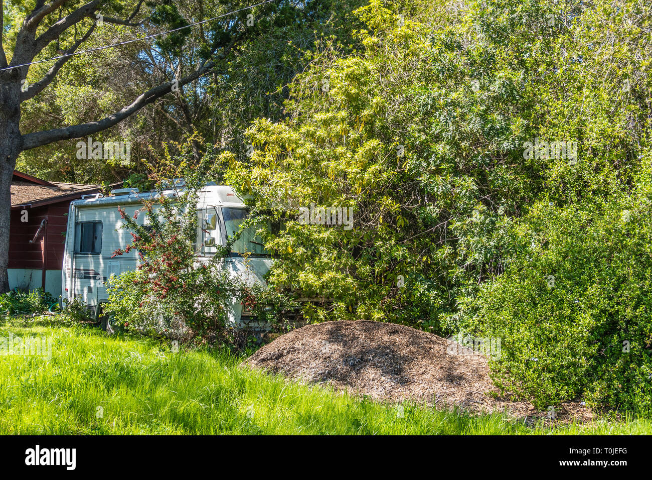A recreational vehicle (RV) is overgrown by bushes due to its neglect and disuse over a period of years. - Stock Image