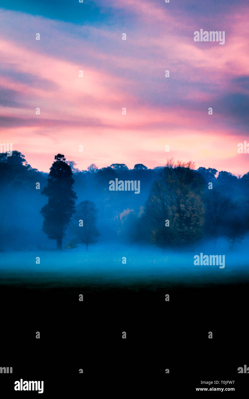 Grainy purple, pink and blue woodland scene, trees shrouded in mist at dusk, dark foreground, suitable for a book cover or greetings card - Stock Image