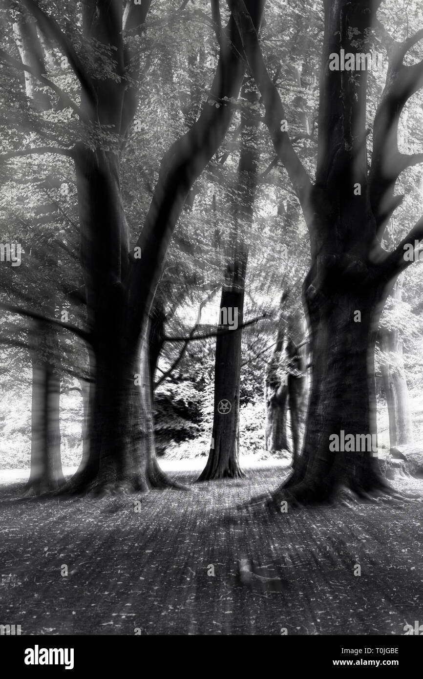 An inverted pentacle chalked on a beech tree in a spooky forest Stock Photo