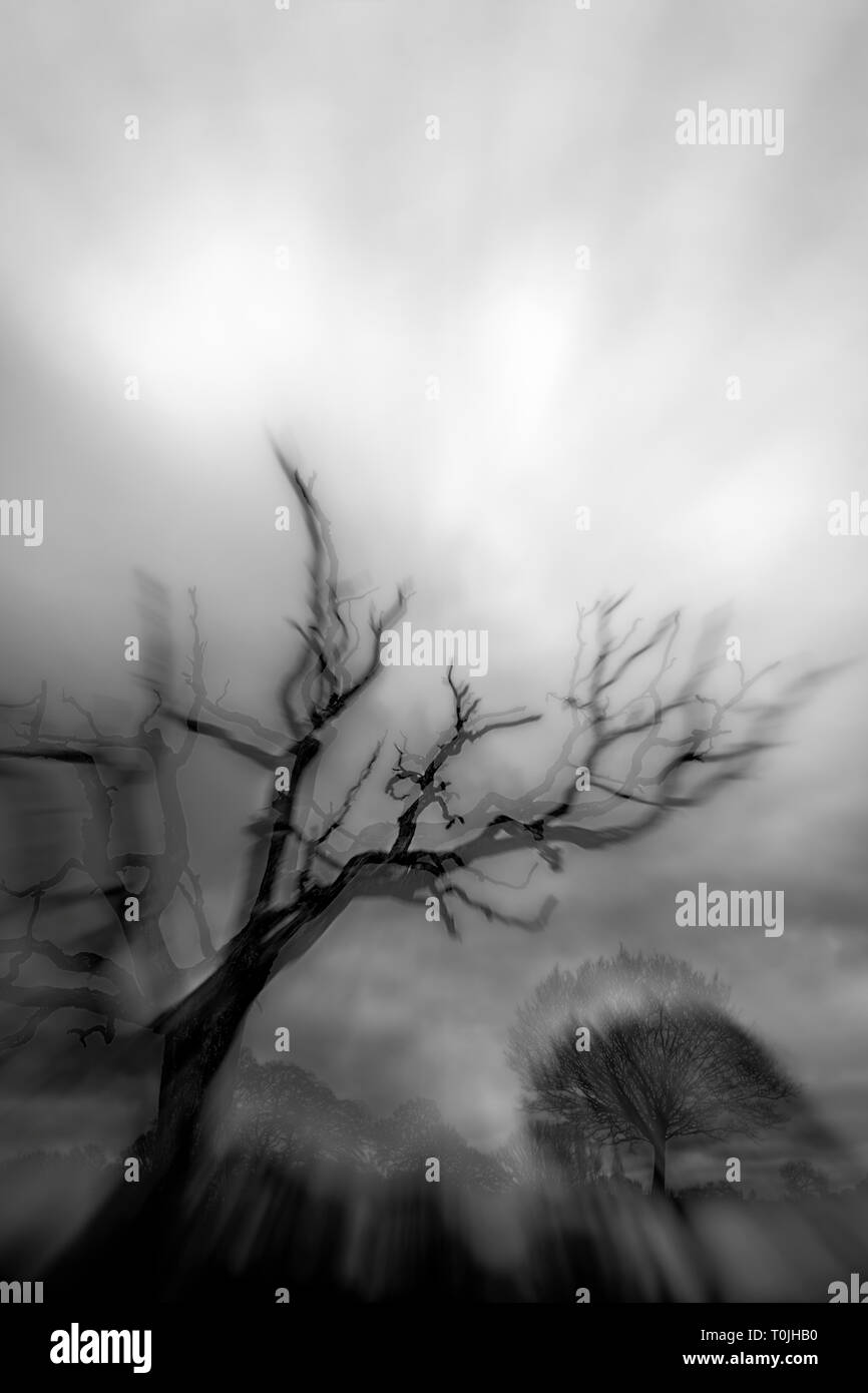 A spooky tree looming on a dark and stormy night in an enchanted forest - Stock Image