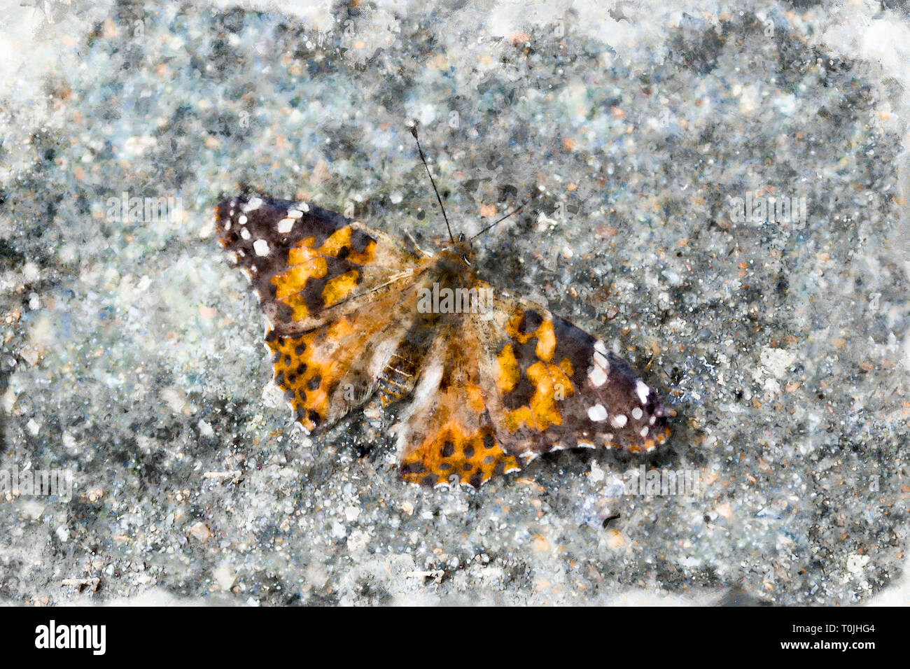 Stylised image of a Painted Lady butterfly basking on a paving stone - Stock Image