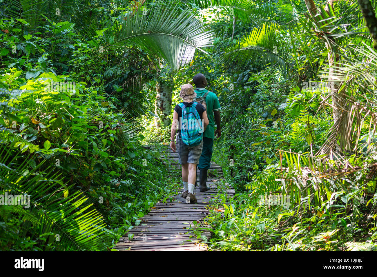 Guided walk in Bigodi Wetland Sanctuary, a community-run nature reserve within the Kibale Forest National Park, South West Uganda, East Africa - Stock Image