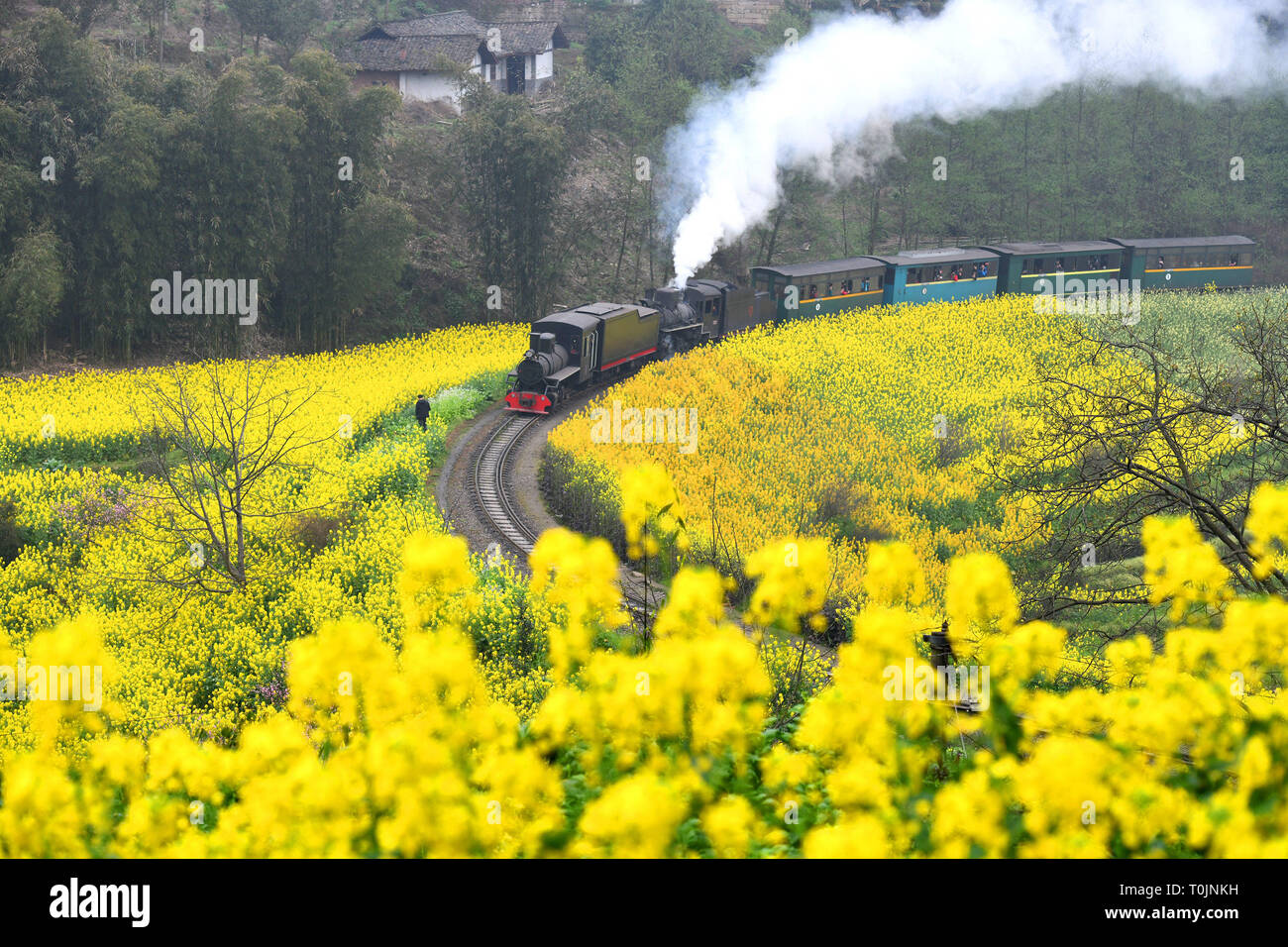 Qianwei, China's Sichuan Province. 20th Mar, 2019. A Jiayang steam train runs on a narrow gauge railway in cole flower fields in Qianwei County, southwest China's Sichuan Province, March 20, 2019. The old-fashioned steam train, running on a narrow gauge railway in Qianwei County, serves mainly in sightseeing, but as increasing number of tourists visit the county in recent years, the train itself has become an attraction providing a journey of reminiscence. Credit: Chen Tianhu/Xinhua/Alamy Live News - Stock Image