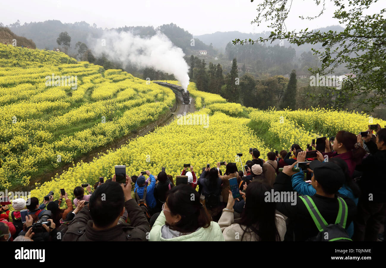Qianwei, China's Sichuan Province. 20th Mar, 2019. Tourists take photos of a Jiayang steam train running on a narrow gauge railway in cole flower fields in Qianwei County, southwest China's Sichuan Province, March 20, 2019. The old-fashioned steam train, running on a narrow gauge railway in Qianwei County, serves mainly in sightseeing, but as increasing number of tourists visit the county in recent years, the train itself has become an attraction providing a journey of reminiscence. Credit: Jiang Hongjing/Xinhua/Alamy Live News - Stock Image