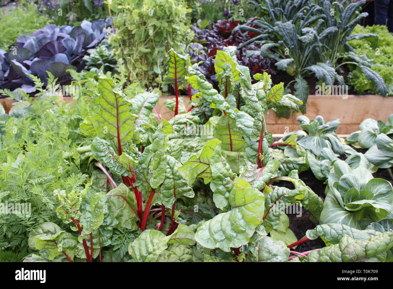 Fresh vegetables and greens garden Stock Photo