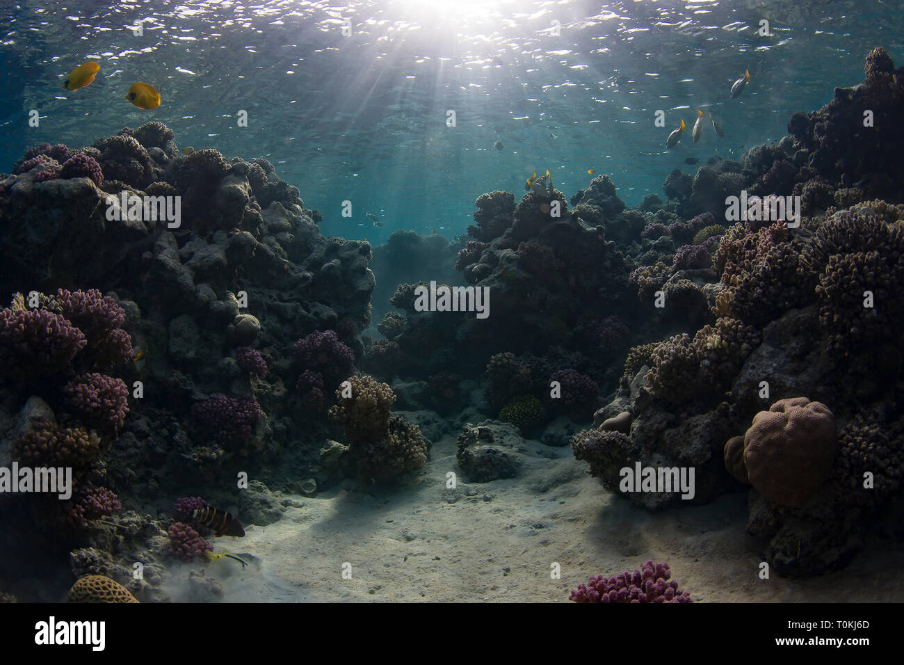Sunrise on Marsa Nakari coral reef in the Red Sea, Egypt - Stock Image