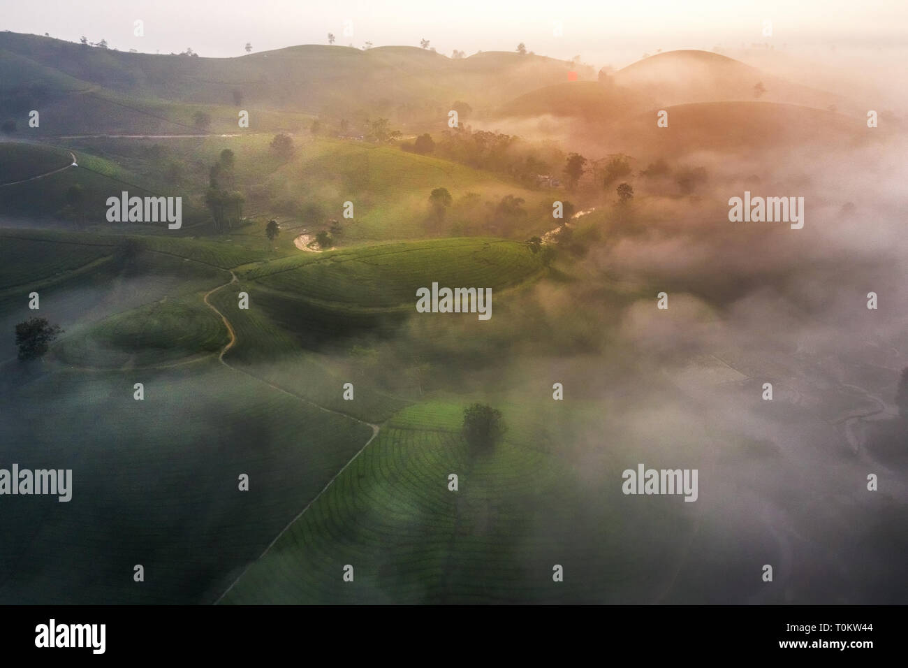 Aerial view of Long Coc tea hill, green landscape background, green leaf. Tan Son, Phu Tho, Viet Nam - Stock Image