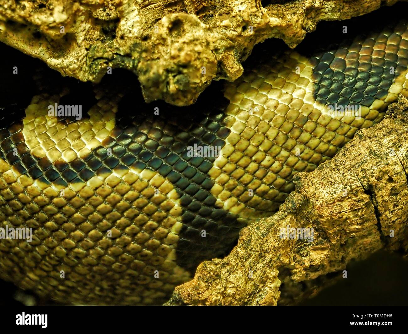 Detail of the skin of a snake with a distinctive pattern and shiny scales. (CTK Photo/Roman Krompolc) Stock Photo
