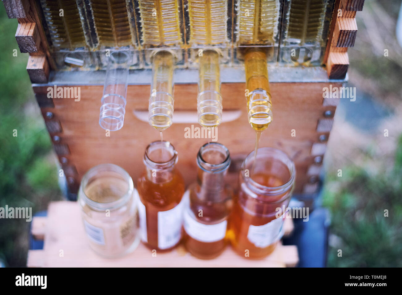 Raw Honey collects into jars from a Flow Hive Honey Super. Stock Photo