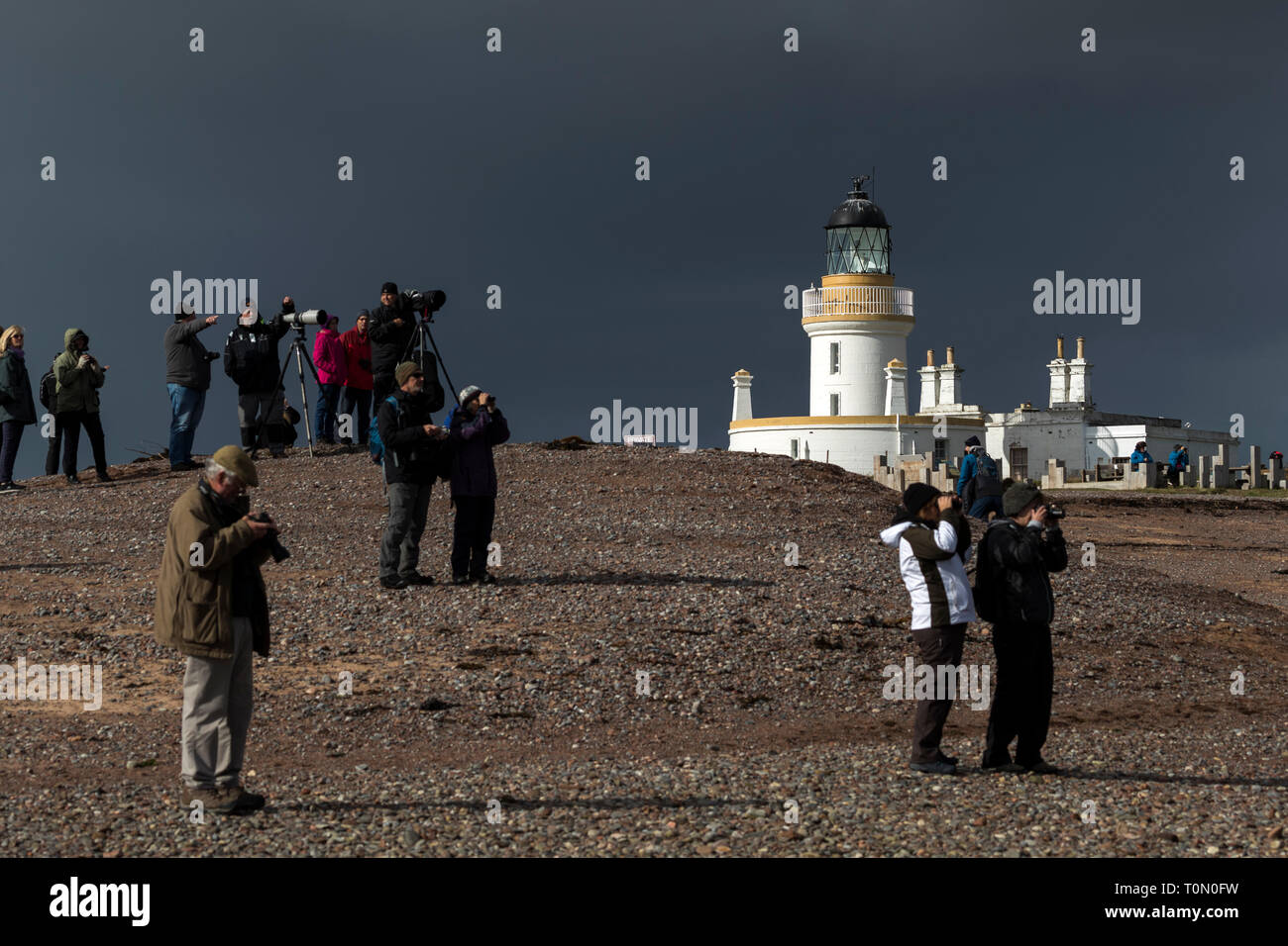 Chanonry Point; Watching for Dolphins in the Moray Firth; Black Isle; Scotland; UK - Stock Image