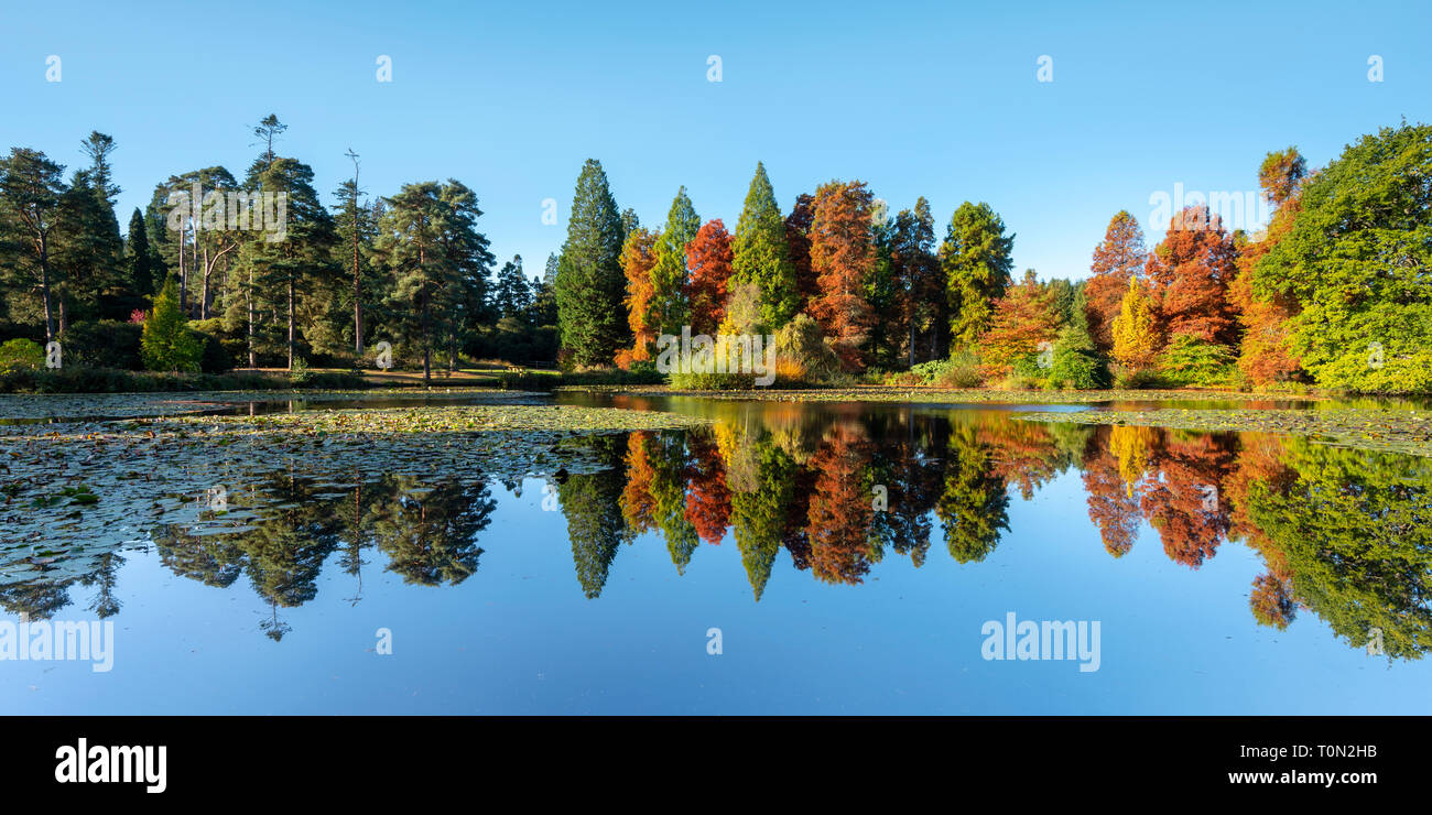 Autumn reflections at Bedgebury National Pinetum and Forest in Kent. - Stock Image