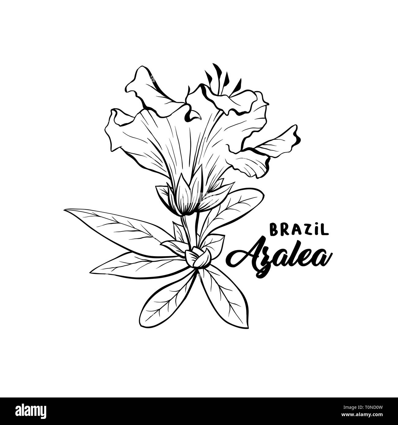 Azalea Flower Brazilian Symbol, ericaceae flowers, hand drawn logo illustration. Beautiful blooming plant inky sketch. Freehand outline floral blossom. Monochrome graphic isolated design element - Stock Vector