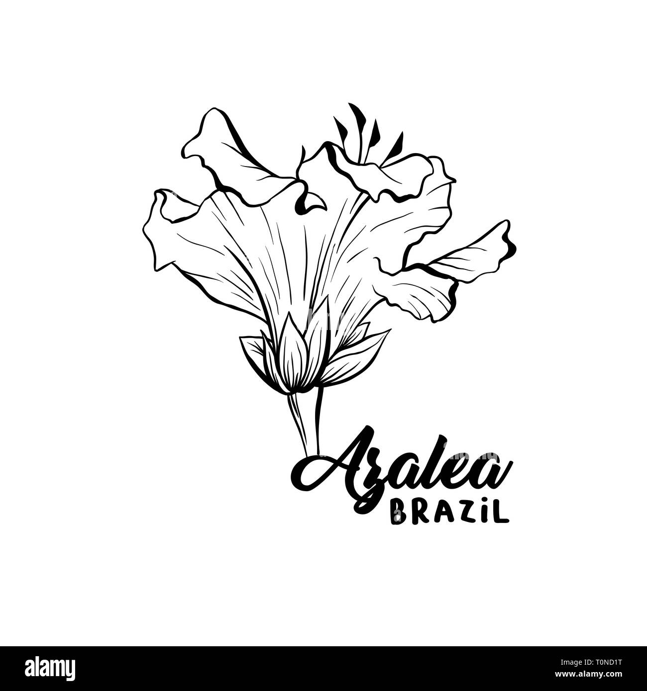 Azalea, ericaceae flowers hand drawn illustration. Beautiful blooming plant ink pen sketch. Freehand outline floral blossom engraving. Greeting card monochrome isolated design element - Stock Vector