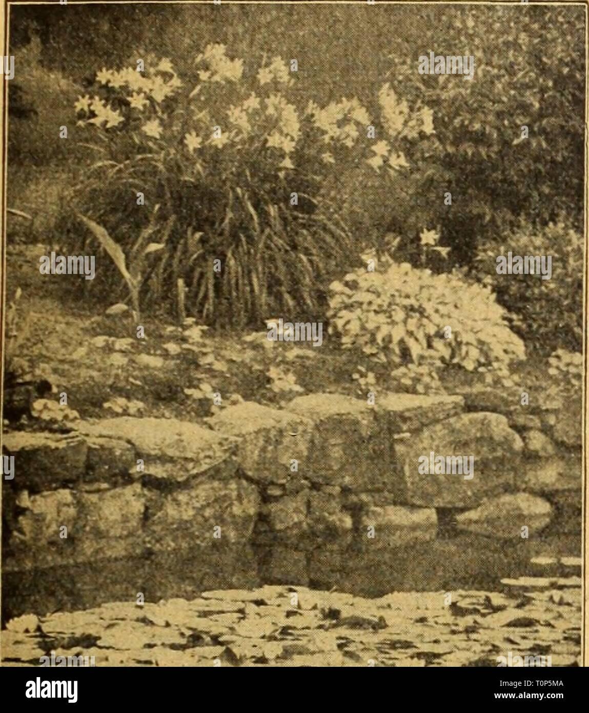 Dreer's autumn catalogue 1926 (1926) Dreer's autumn catalogue 1926
