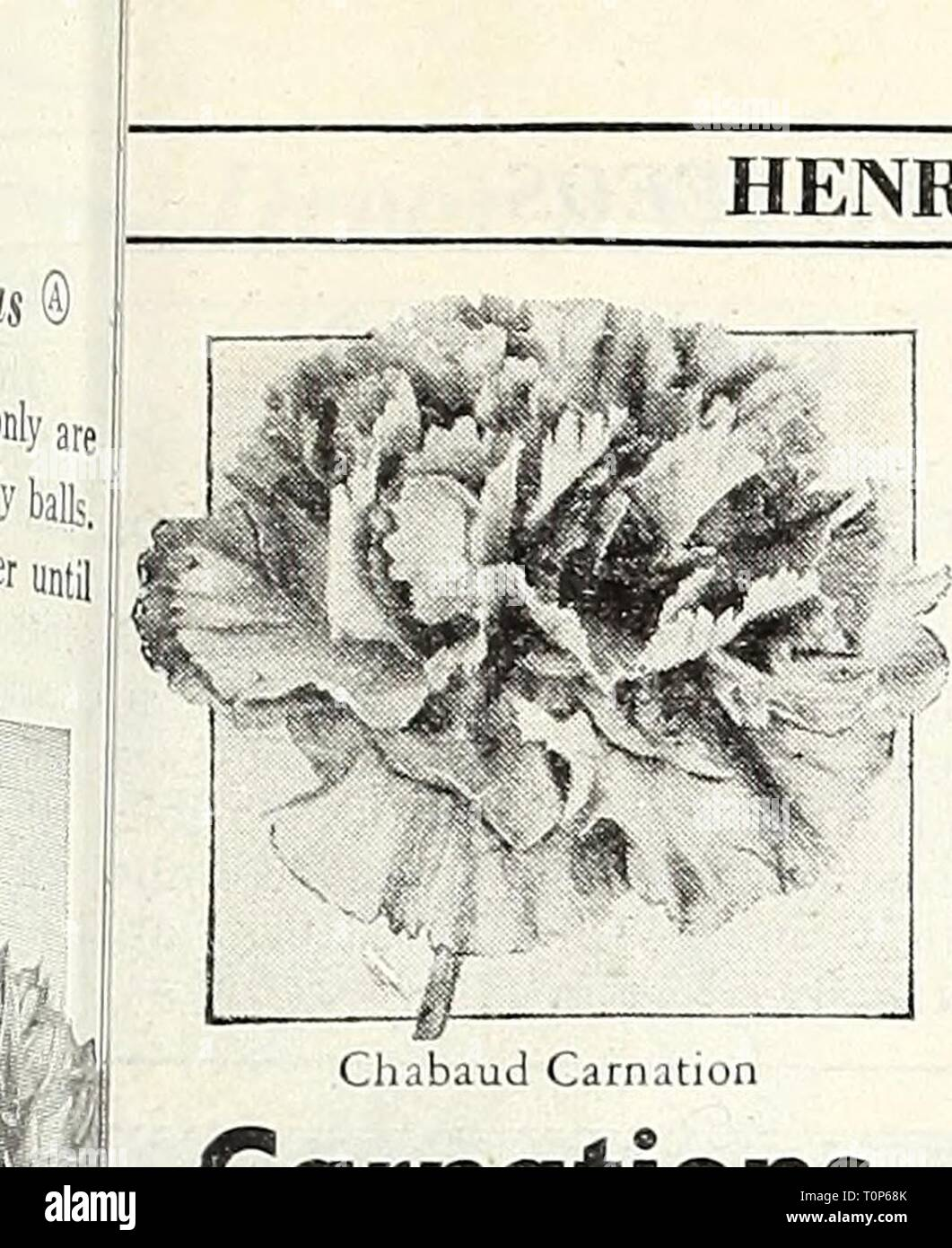 Dreer's 1948 - our 110th Dreer's 1948 - our 110th year  dreers1948our1101948henr Year: 1948  HENRY A. DKEER, Inc., Philadelphia, Pa. r Carnations anthus caryophyllus @ & [hhp] [ndispensable for greenhouse culture winter and for the summer garden. habaud's Giant Double [nup] Richly clove-scented, large double ooms measuring 2 inches or more ross. Often grown as annuals bloom- 5 in 5 to 6 months from sowing. 2 ft. '61 Blood Red 1767 Scarlef 64 Deep Salmon 1768 Whi^e 65 Rose 1769 Yellow Any of the above: Pkt. 15c; large pkt. 60c. 4780 Chnbaud Carnation Collection One packet each of the rp six col - Stock Image