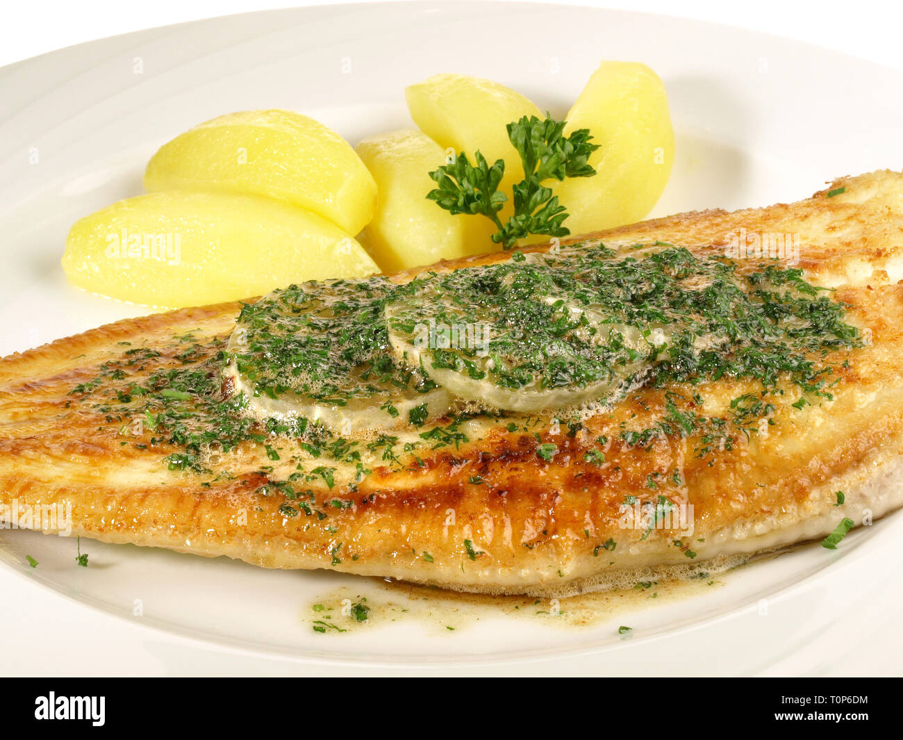 Sole - Flatfish on Withe - Stock Image