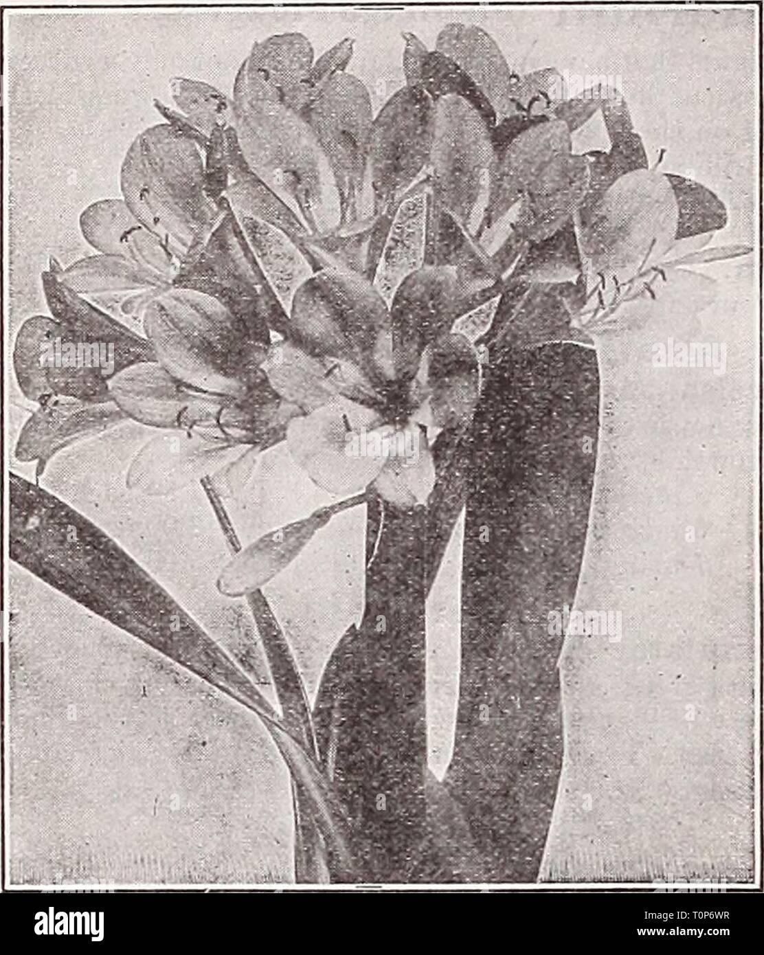25 Drosera indica semi