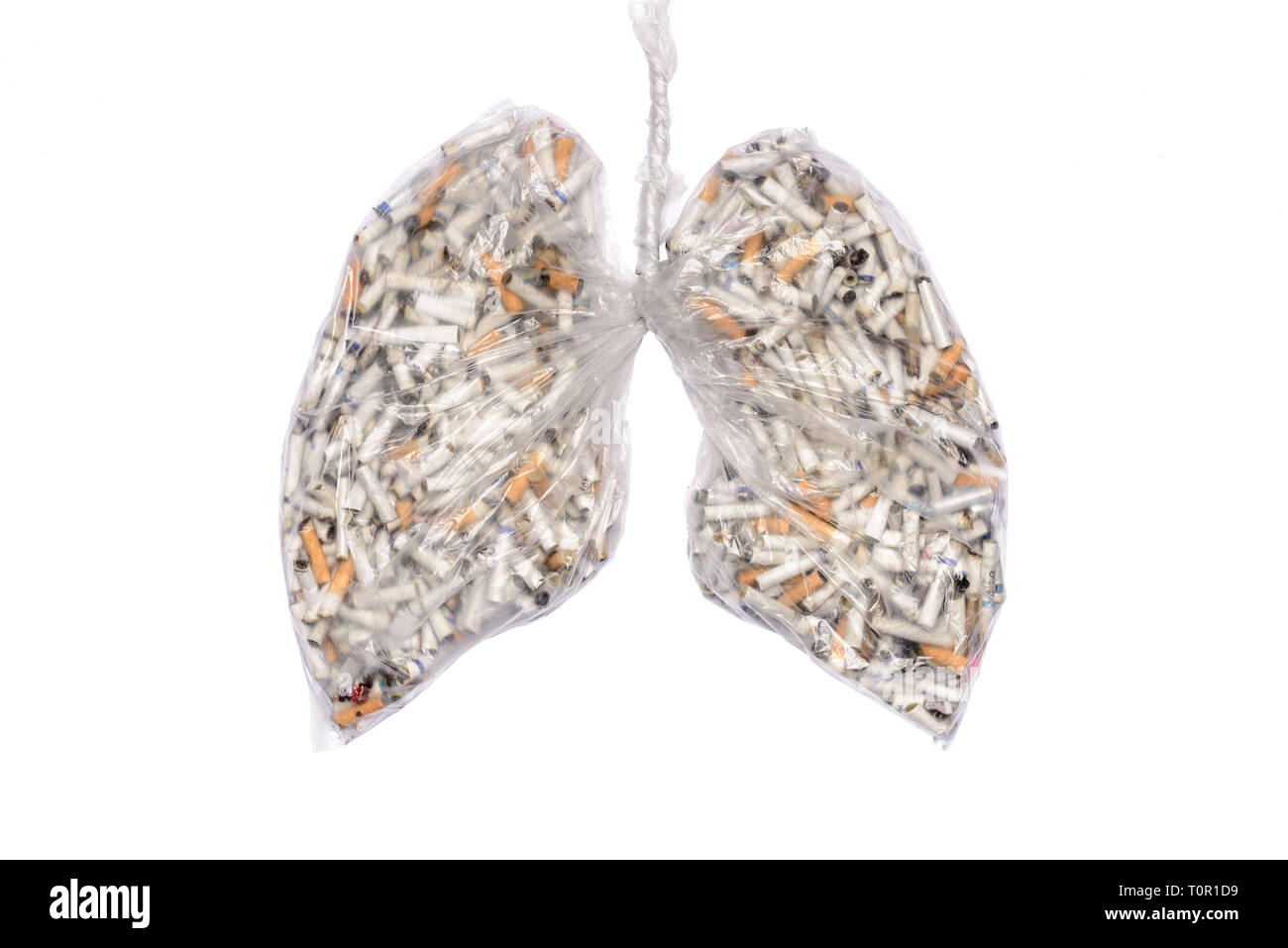 Stop smoking. Cigarette butts in pulmonary contour in transparent nylon pouch. No smoking awareness, poison and diseases of cigarette. - Stock Image