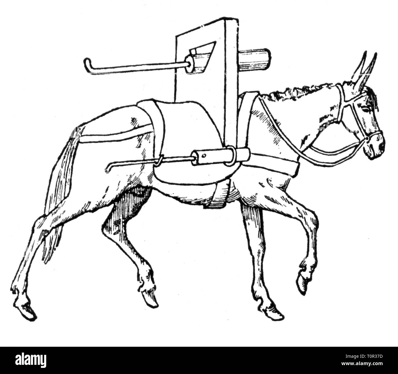 military, artillery, guns, light gun of the mountain artillery, mounted on a mule, after manuscript, 1450, Additional-Rights-Clearance-Info-Not-Available - Stock Image